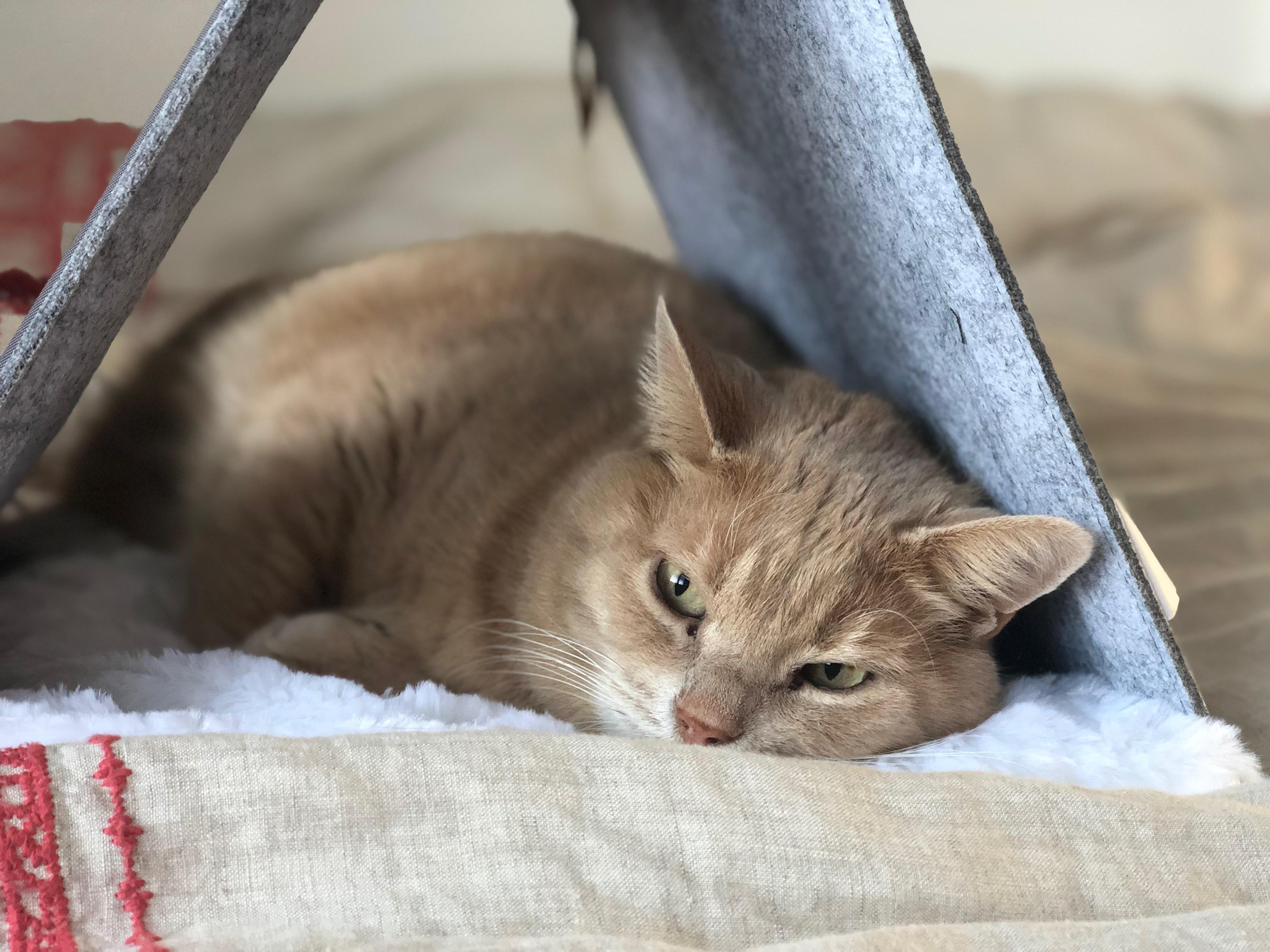 Mimine dans sa tente